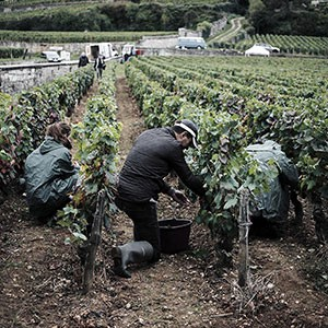 <span>Burgundy </span>Pommard