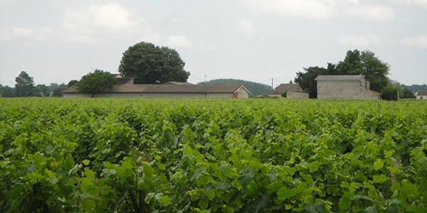 <span>Château </span>Tour du Bosquay