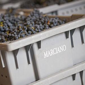 Marciano Estate