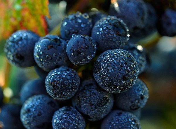 Vins Rouge